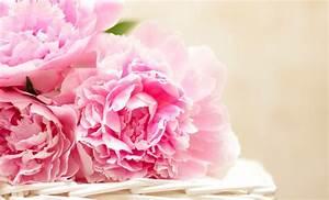 Offrir Un Bouquet De Fleurs : 10 fleurs que vous ne devriez jamais offrir quiconque closion ~ Melissatoandfro.com Idées de Décoration