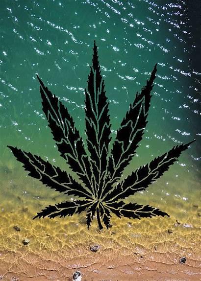Weed Marijuana Psychedelic Gifs Maconha Fondos Pantalla