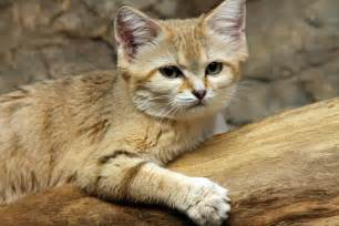 sand cats for database error