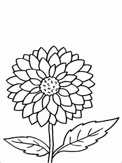 Coloring Colorir Desenho Dahlia Pintar Flower Desenhos
