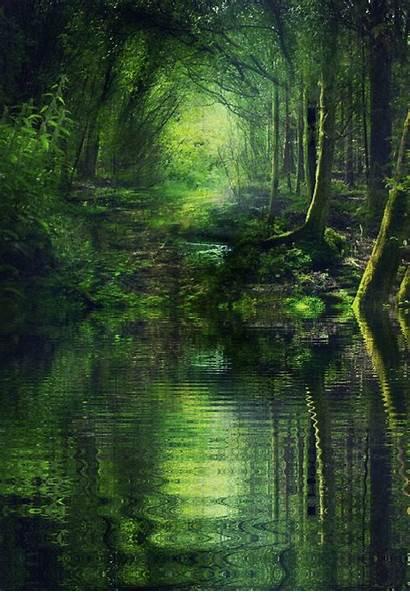 Forest Fairy Fantasy Woods Landscape Leprechaun Deep