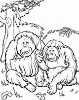 Zoo Coloring Orangutans sketch template