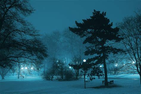 atmosphere branch cold dark dawn fog foggy frost frozen
