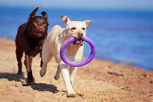 the top ten best chew toys for destructive dogs With the best dog toys for dogs who chew