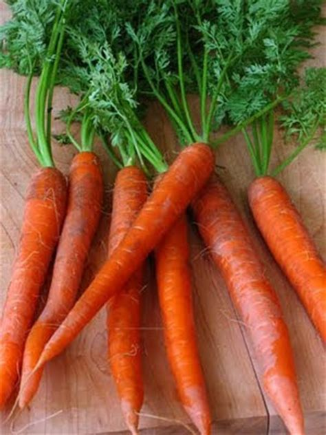 elizavegan page moosewood russian carrot pie veganized