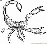 Scorpion Coloring Pages Geography sketch template
