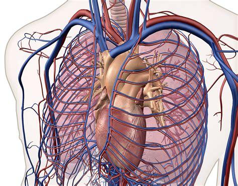 left atrial enlargement linked  vascular brain injury