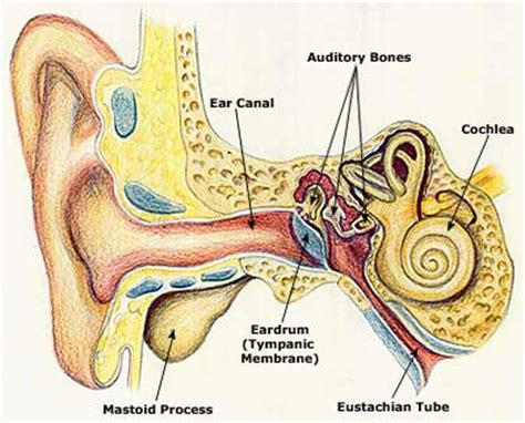 chronic ear infections    signs