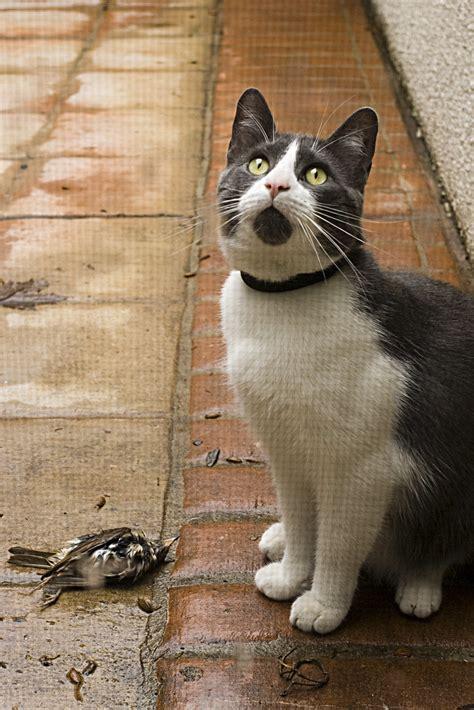 hey  dead bird buddy didnt kill  im pretty