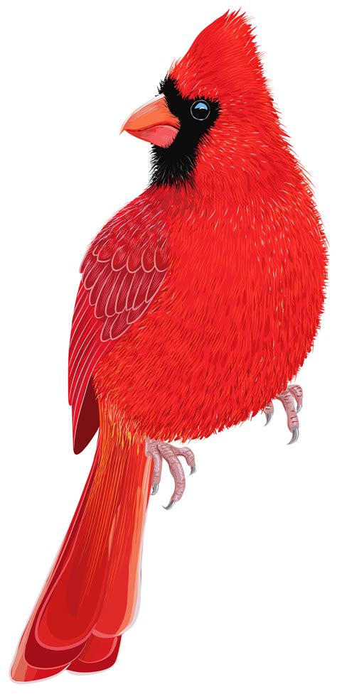red bird png clipart image  web clipart