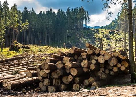 Reasons And Causes Of Deforestation  Find Detail Information