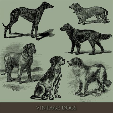 vintage dog illustration  stock photo public domain
