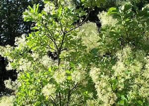 Pflanzen Für Dachterrasse : geeignete pflanzen f r den dachgarten geh lze stauden ~ Michelbontemps.com Haus und Dekorationen