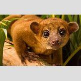 Images Of Land Animals   640 x 405 jpeg 43kB