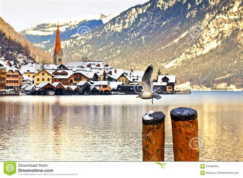villaggio 2 gabbiano un volo gabbiano al villaggio di hallstatt fotografia