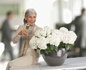 Pflegeleichte Zimmerpflanzen Mit Blüten : hortensien als bl hendes traumm bel das gr ne medienhaus ~ Sanjose-hotels-ca.com Haus und Dekorationen