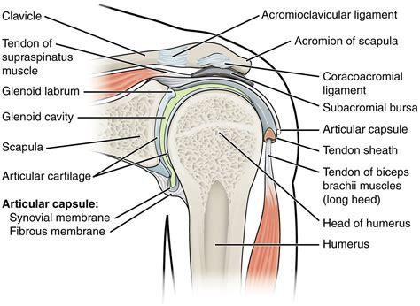 Printable Shoulder Diagram