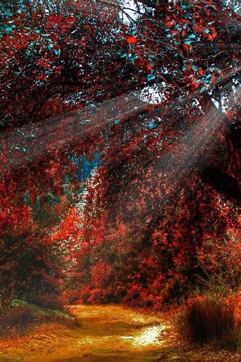 sun autumn landscapes light nature wallpaper