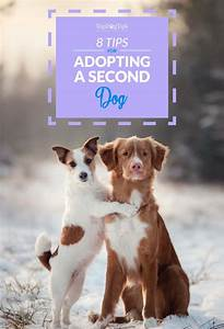 8 tips on adopting a second dog how to do it safely With adopting a new dog