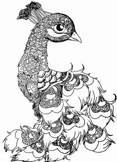 Mandala Animal Bird Clipart Peacock Drawing Drawings
