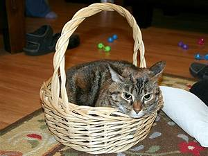Cat, In, A, Basket, U00ab, When, Chemists, Attack