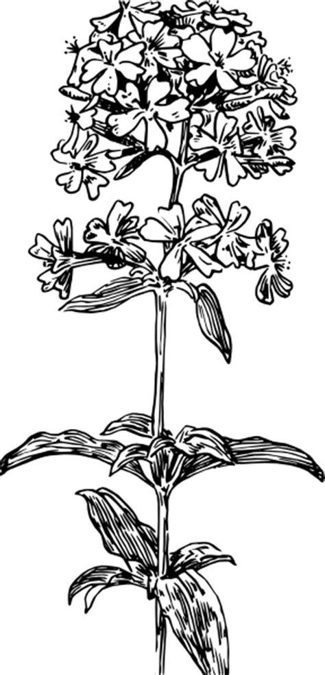 Hydrangea Flower Clip Art at Clker.com - vector clip art