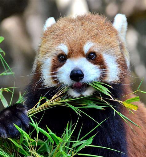 Super Cute Animals Funoramic