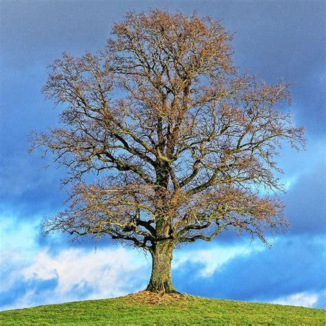 Im Herbst Und Winter by Baumschnitt Was Passiert Im Baum Im Jahresverlauf