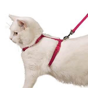 cat harnesses pet supplies savvy tabby cat harness 3 8 inch
