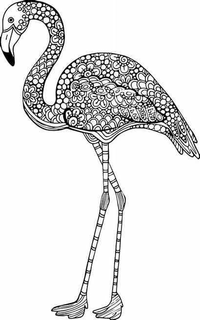 Coloring Flamingo Adult Animal Mandala Advanced Animals