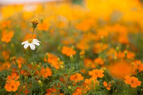 bloemen in afwasmiddel en water fotograferen tips voor bloemenfotografie fotocursus hoofddorp