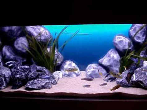 aquarium 500 liter malawi aquarium 500 liter 130 gallon