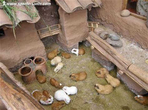 photo famille cochon chat lapin auto design tech