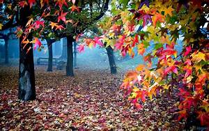 Beautiful Colorful Nature - XciteFun.net
