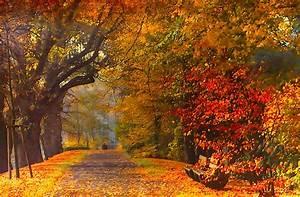 Bilder Herbst Kostenlos : allee im herbst foto bild allee herbstfarbe stadtallee bilder auf fotocommunity ~ Somuchworld.com Haus und Dekorationen