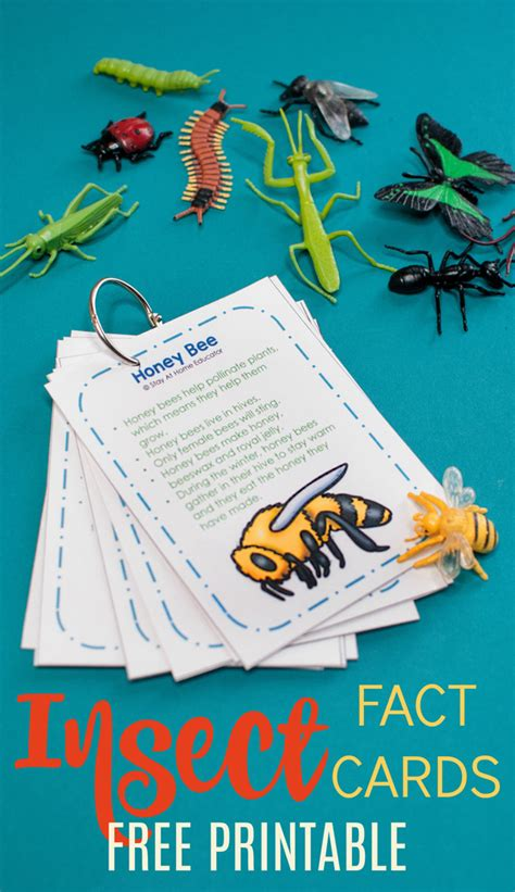 fun facts about ants for preschoolers how to teach cool bug facts in a preschool insect theme 219