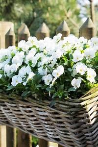Blumenkästen Bepflanzen Ideen : pflegeleichte balkonpflanzen den balkon leicht und schnell versch nern balkon balkon ~ Eleganceandgraceweddings.com Haus und Dekorationen