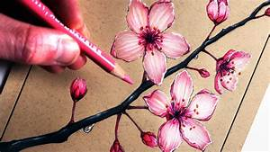 Colored Pencil Draw Cherry Blossom Branch How To Draw ...