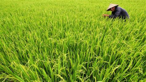 agriculture irrigation mekong river commission