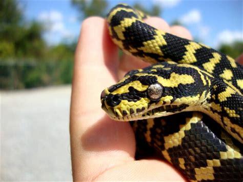 iherp  reptile software husbandry community