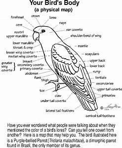 Parrot Anatomy