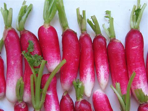 cuisiner le radis blanc le radis