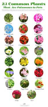 plants poisonous to cats common house and garden plants that are toxic to your dogs