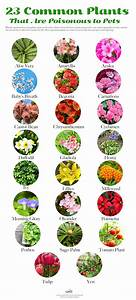 Common House And Garden Plants That Are Toxic To Your Dogs