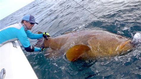 grouper giant fishing handline 4k blacktiph challenge