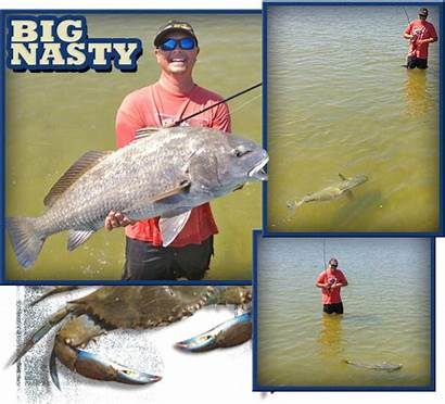 Drum Florida Fishing Fish Eat Catch