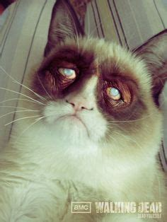 1000+ Images About Grumpy Cat On Pinterest  Angry Cat