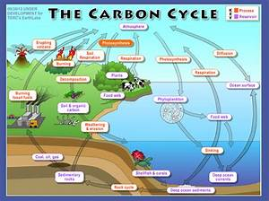 Biology Class Blog