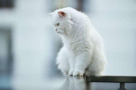 Kuri kaķi piesaista veiksmi?