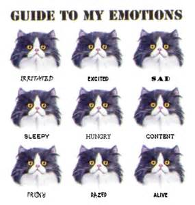 cat emotions identifying emotions of your cat and or inklings and